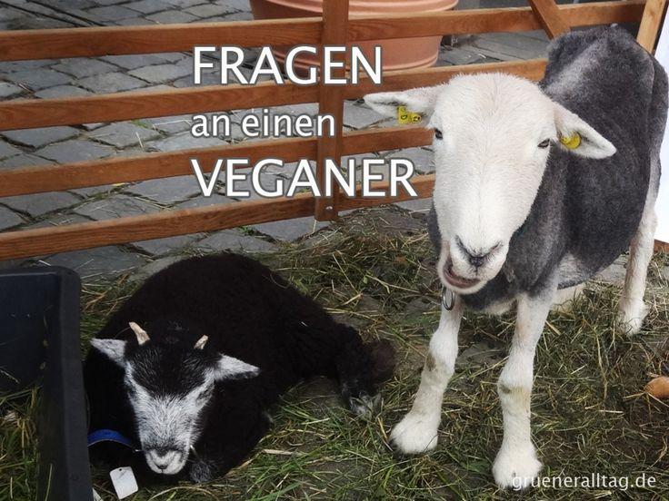 Um die unnötige Kluft zwischen Veganern und Nichtveganern zu überbrücken beantworte ich häufige, interessante oder lustige Fragen in meiner Blogreihe.