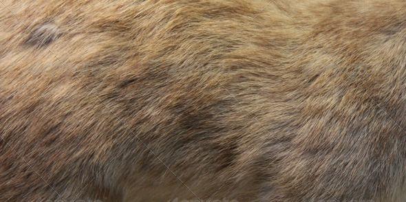 20 Fur Textures Pack One Texture Packs Game Textures Fur Textures