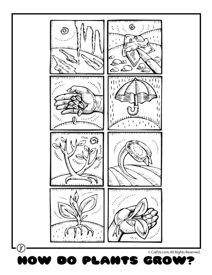 A great worksheet that can be printed out for each kindergartener to color : EDCI454-Unit: Plant ...