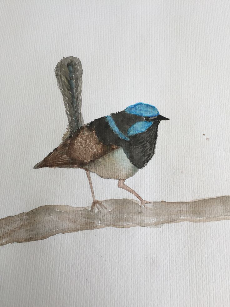 Water colour blue wren painted by me 2015