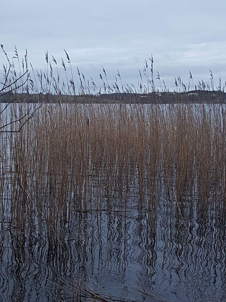 Frøylandsvannet