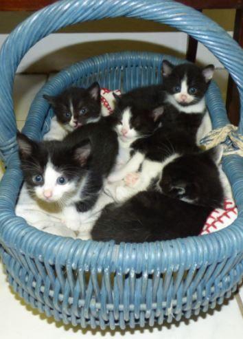 Ein Korb voll Kätzchen