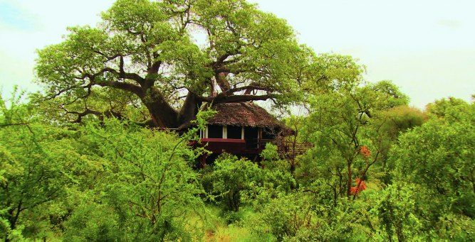 Tarangire Treetops, Tarangire - TANZANIA. Tarangire Treetops is located in a private wildlife concession in Tarangire National Park.