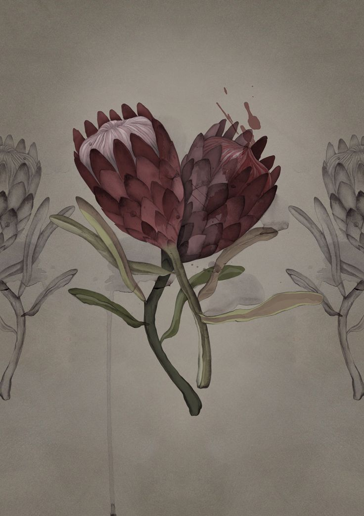 The Proteas. Limited Edition Giclée Printed on 100 year fade proof fine art paper Illustration size: 30 x 42cm (A3) Paper size: 34 x 47 cm