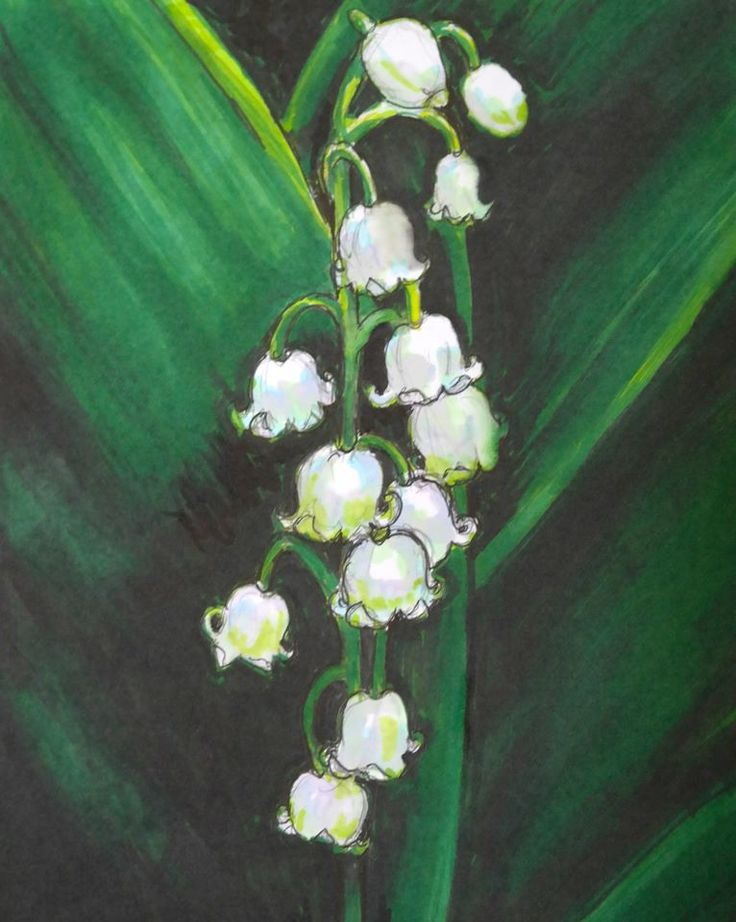 Pro-markers drawing of Lily of the Valley.