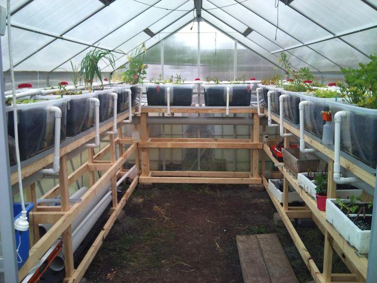 My husbands aquaponic greenhouse garden Macedon Ranges Aquaponics