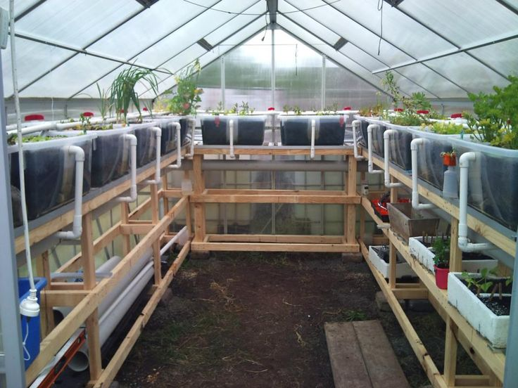 My husbands aquaponic greenhouse garden Macedon Ranges Aquaponics
