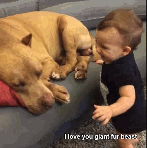 huge, dog, little, baby GIF
