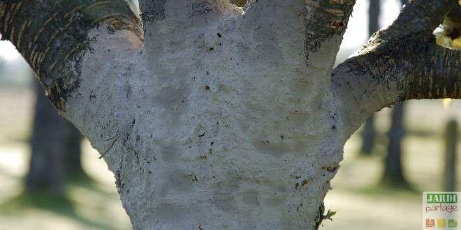 """On le savait déjà: la cendre est """"un couteau suisse"""" au jardin ! En voici par exemple deux utilisations aujourd'hui: le badigeon de cendres, pour lutter contre les pucerons et le lait de cendres, pour donner un petit coup de fouet aux cultures. Chez la tomate (notamment l'andine cornue), il permet aussi de lutter contre la maladie du """"cul noir"""" http://www.jardipartage.fr/contre-pucerons-cendres/"""