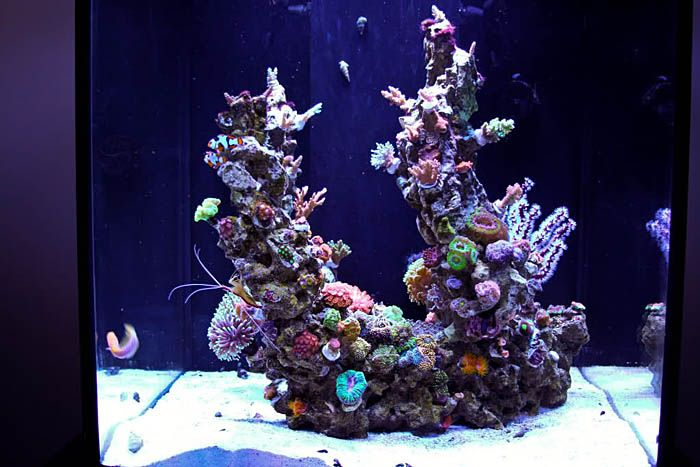 how to aquascape a reef aquarium | Minimalist Aquascaping