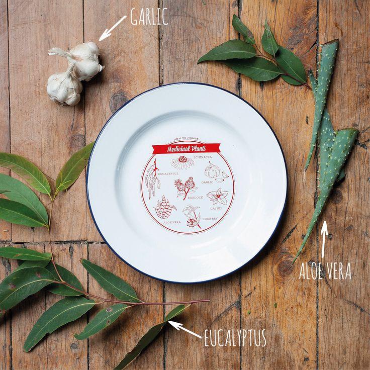 http://tmod.com.au/product/medicinal-plants-enamel-plate