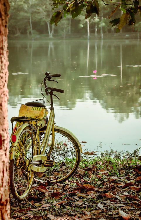 Bicycle Cycling Land Vehicle Mode Of Transport Outdoors Parked Peace And Quiet Peaceful Peaceful View Reflection Robyn Haworth Stationary On Your Bike Tropical Climate