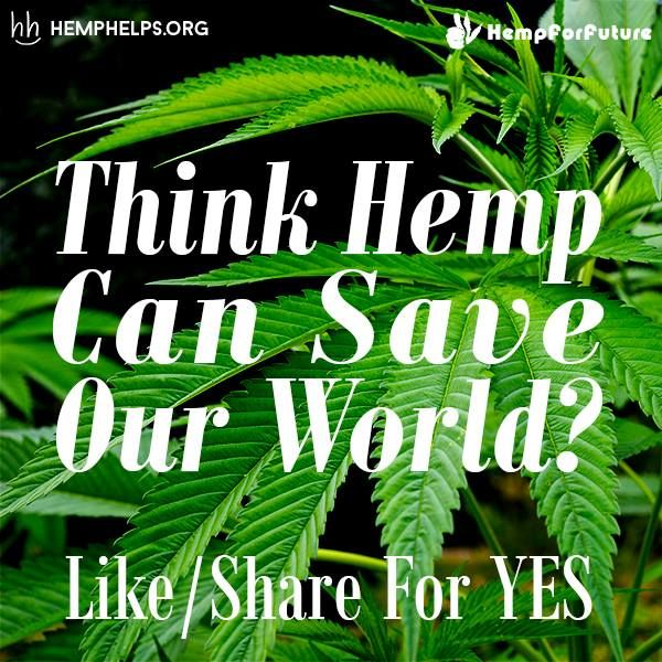 #Hemp can have a huge impact in most of the industries that contribute to poisoning the #Earth. Hemp can be processed into a more durable & sustainable plastic, paper product, fuel, building material, & textile. If this super plant was taken seriously in these industries it would truly help heal Mother Nature. On top of this the nutritional & medical benefits would heal the people as well. #Support Hemp by making it apart of your everyday!