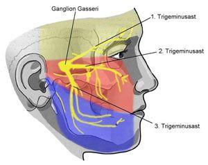 Trigeminusäste