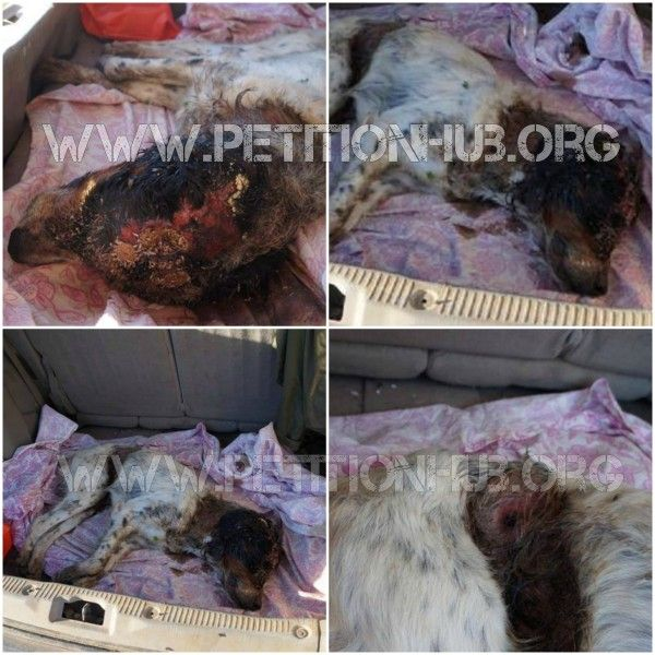 This dog was wondering in a pitiful state for many days. No one even noticed the severe wounds that he had. The dog was attacked by someone and he ended u... the man who did must be punished to the full extent of the law.