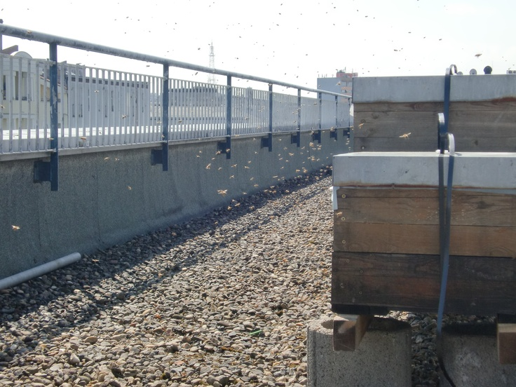 5 Mio. bees for own honey