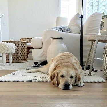 E' bello avere un angolino in casa dove rilassarsi, anche per gli animali domestici. #Tappeti Sukhi fatti su misura li trovate qui: http://www.sukhi.it/su-misura-rettangolari-tappeti-di-palline-con-disegno.html