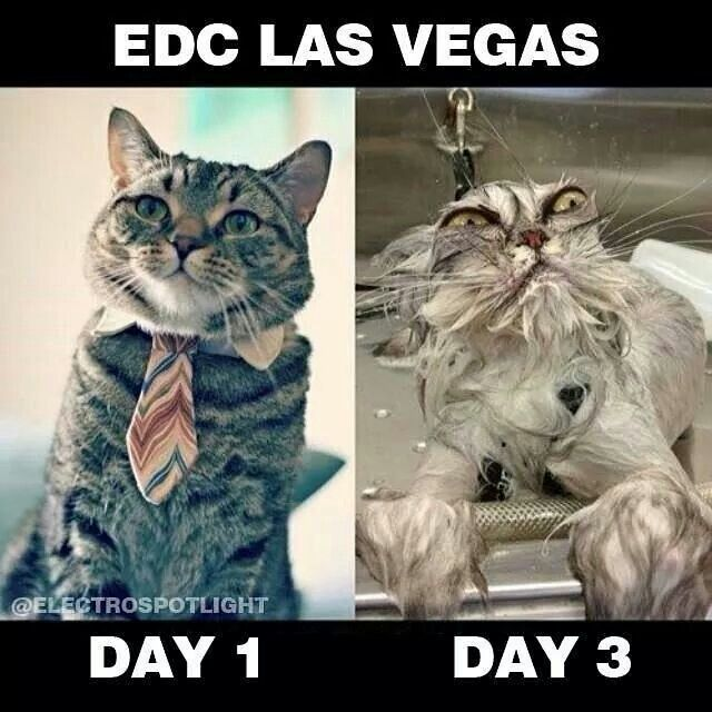 b90a3c659d6a95212a017bc34daffb91 cats humor funny humor 225 best edc 2014 vegas images on pinterest music festivals