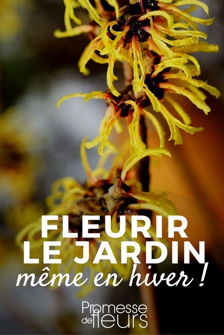 Fleurir Votre Jardin En Hiver Jardins Amenagement Jardin D