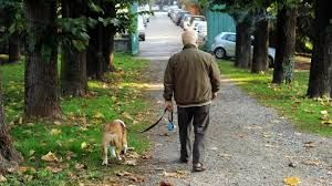 Cani a spasso nei parchi cittadini: il sindaco non può vietarlo. Lo dice il giudice :http://www.qualazampa.news/2016/06/29/cani-a-spasso-nei-parchi-cittadini-il-sindaco-non-puo-vietarlo-lo-dice-il-giudice/