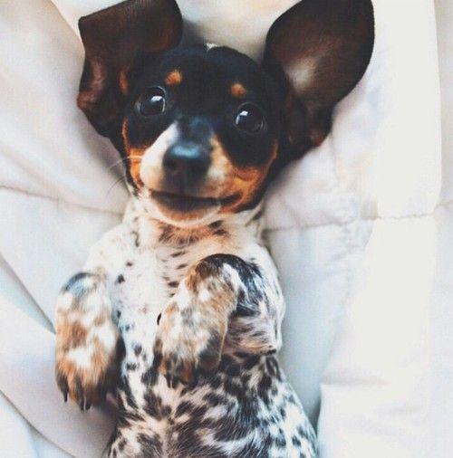 Ponywelt   via Tumblr brown - dog, #spots