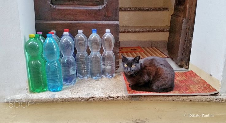Thirsty cat! - (March 2017)