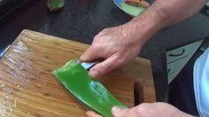 Aprende A Preparar Correctamente Gel De Aloe Vera Para Realizar Una Limpieza De Colon Efectivamente