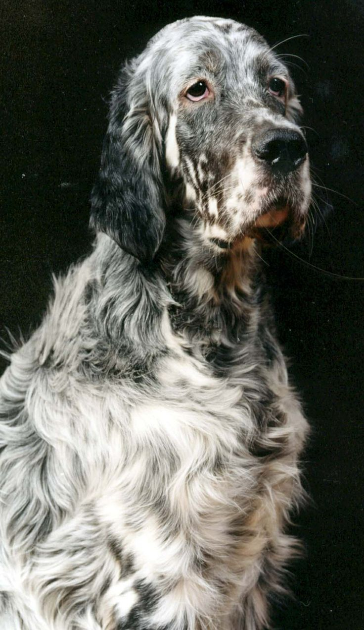 50 best HUNTING DOGS i...
