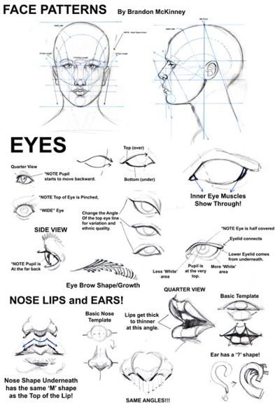 eyes (and more). Well this is just so handy, since heads and faces are especially confounding. Thes angles are so easy to remember.