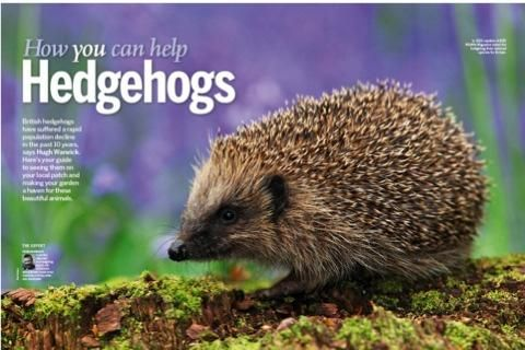 How you can help hedgehogs, BBC Wildlife, Spring 2014.