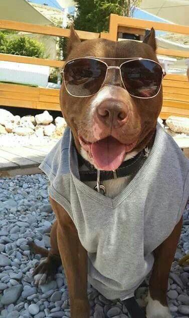 Sheriff Pitbull