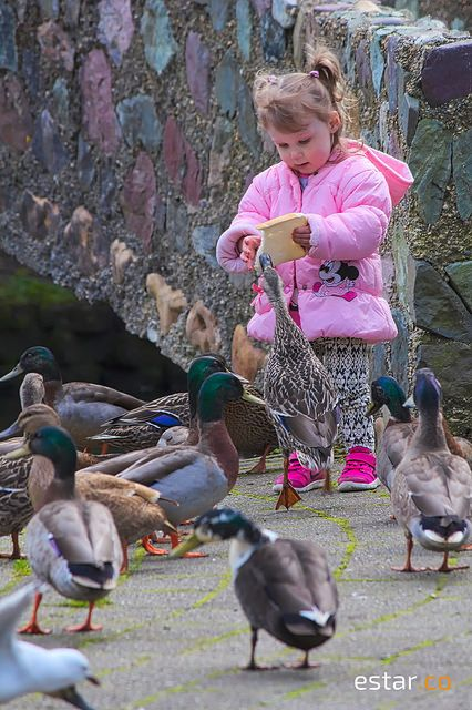 Hungry Duck | Flickr - Photo Sharing!