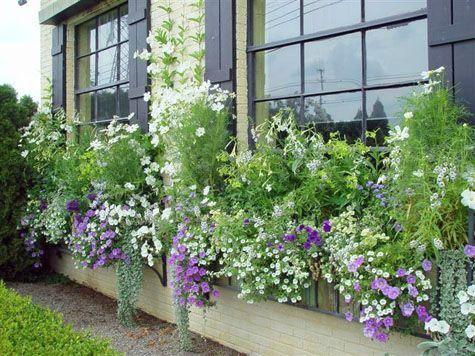 Les 25 meilleures id es concernant jardini res d 39 t sur for Plantes et jardin exterieur