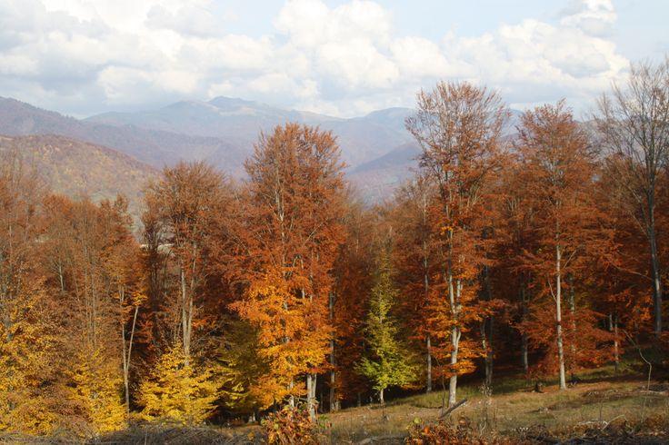 Rumunia 2013 Actifun