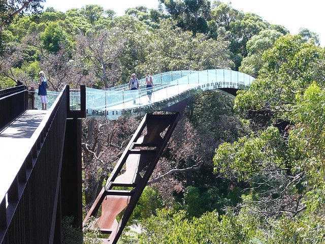 tree top walkway at Kings Park in Perth, Australia... Hopefully I make it back at some point!