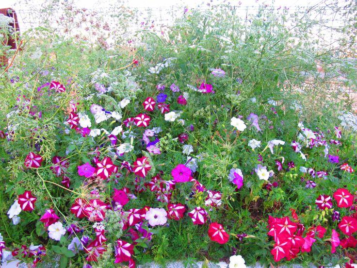 Terry's garden
