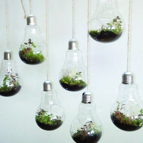 Флорариумы-лампочки #florarium