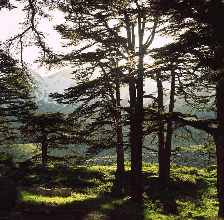 The Forest of God's Cedars, Bcharre District, North Governorate, Lebanon