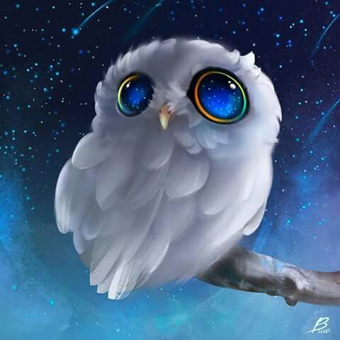 White Owl - Blue Eyes