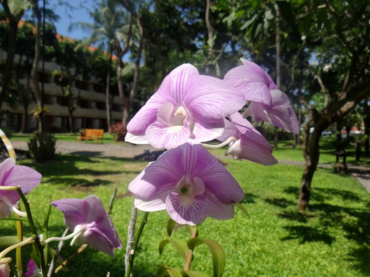 beautiful orchid by the graden