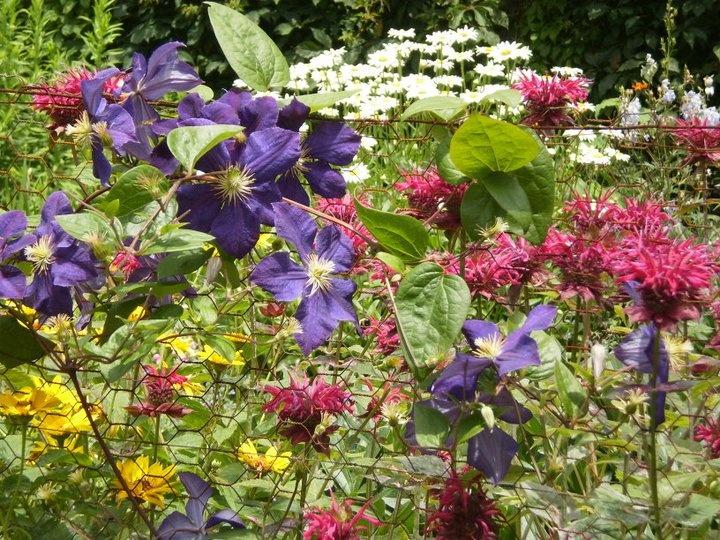 Gardens at Olana