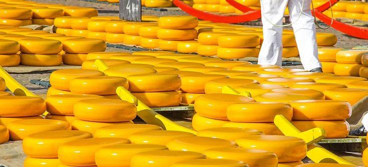 Sýry se nosí na nosítkách