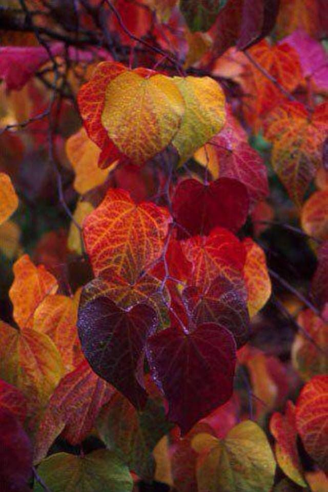 Hello, Autumn. And hello to deep reds, blues, and yellows…