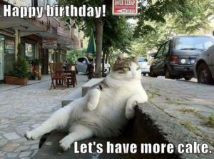Birthday Cake Cat Meme