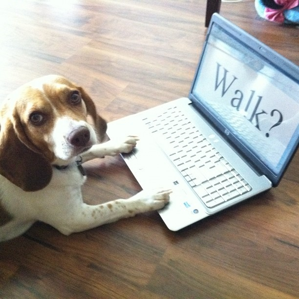 I am so glad my beagle can't type this....she would have my lap top 24/7 lol