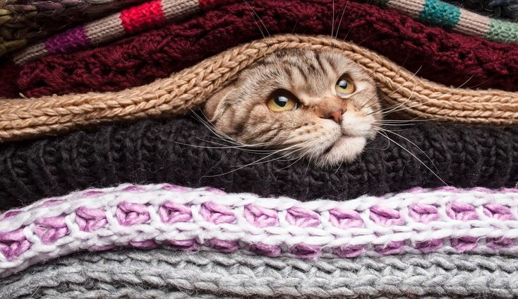 5 Cold Weather Pet Tips