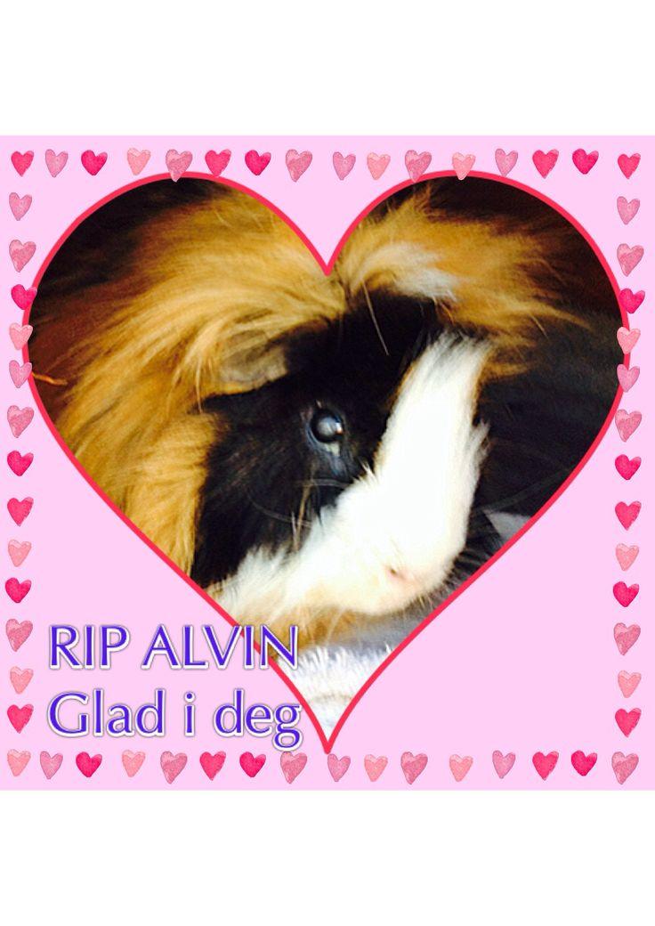 Mistet vår lille Alvin gutt 25/8 Savner deg lille venn <3