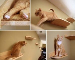 Catify your house! I actually want to have a cat room(s) one day-then my cats will love me even more...hahaha...