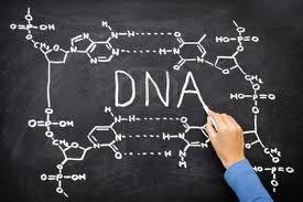 COMPOSICIÓN QUÍMICA DEL ADN: Puentes de Hidrógeno entre bases nitrogenadas. (A=T y G≡C) #Bases #Herencia #Bioquímica