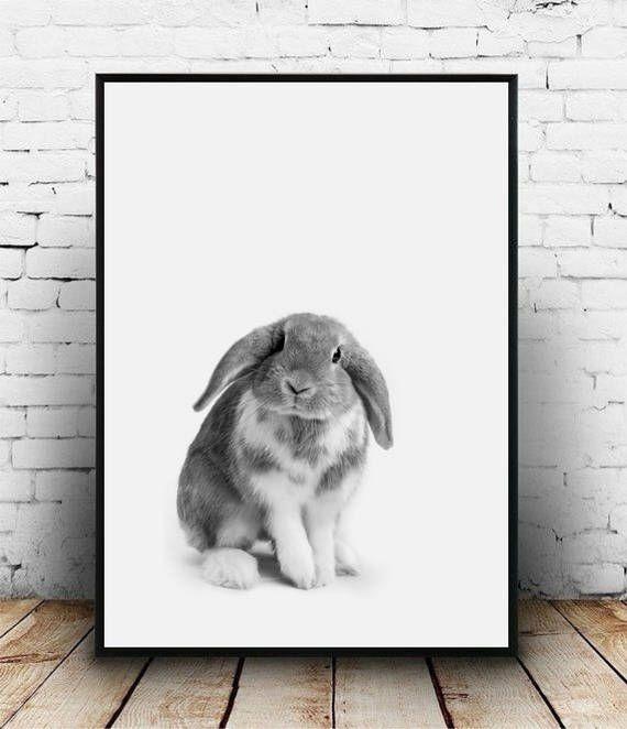 Baby rabbit print, Little rabbit poster, Woodland bunny print, Nursery printable Rabbit photo Nursery wall art Nursery print Rabbit portrait by homelyspace on Etsy https://www.etsy.com/au/listing/553164281/baby-rabbit-print-little-rabbit-poster